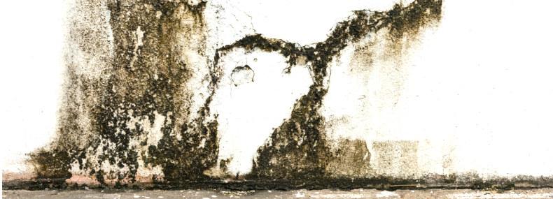 Eflorencia en superficie